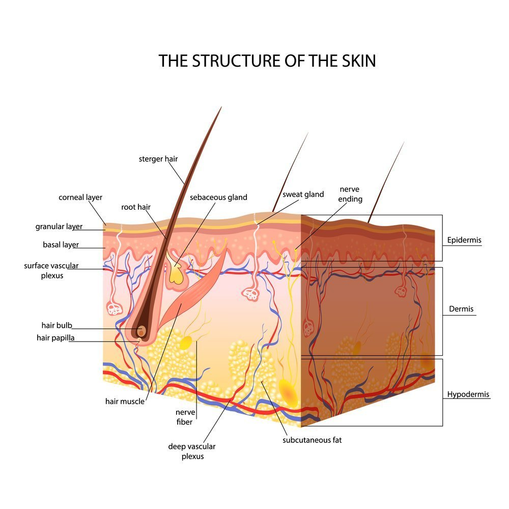Skin Layers - Your Brand Of Beauty
